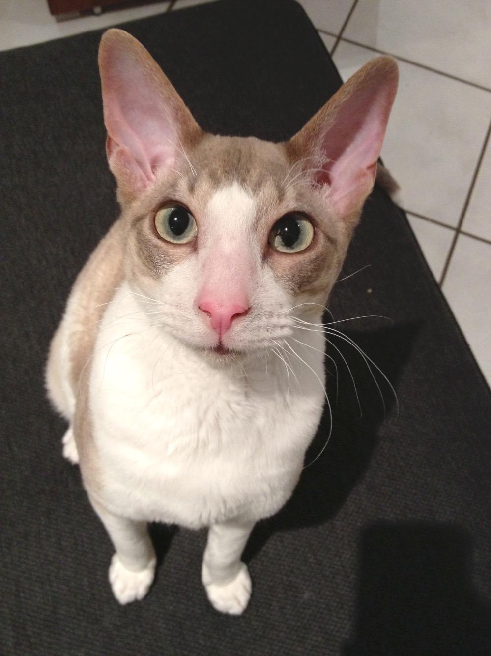 Meet Sam   www.thesmallworld.com.au